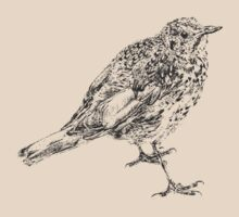 songthrush by andrew j wrigley
