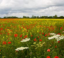 Poppies at Hayton by Jon Tait