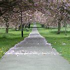Cherry Blossom Lane by TREVOR34