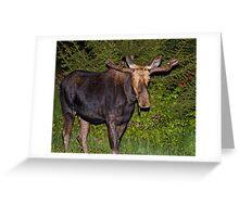 Nightwalker: Bull Moose Greeting Card
