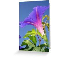 Close Up Of Ipomoea with Leaf and Sky Background Greeting Card