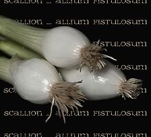 Scallion ~ allium fistulosum by Rosalie Dale