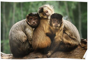 Three Wise Monkeys by Heather Prince ( Hartkamp )