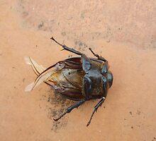 cockroach by sarahric