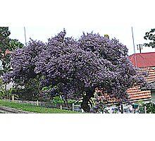 Purple Tree                                                                                                     from near me Photographic Print