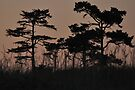 I see through the Trees by Barbara Burkhardt