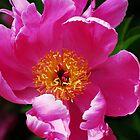 Garden Flowers by William Sanford