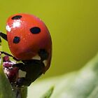 Lady Bug, Lady Bug, Fly away by Dana Harvey