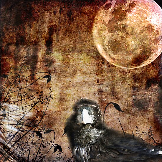 The Bird and The Moon by Anne  McGinn