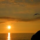 Cornwall: The Seagull and The Sunset by Rob Parsons