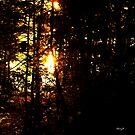 sun through the trees by Cheryl Dunning
