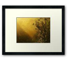 """""""Banksia in the Mist"""" Framed Print"""