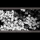 Flowers 03 by Ronald Eller