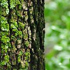 tree moss by feeee
