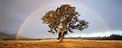 After the Rain, Dunkeld, Victoria, Australia by Michael Boniwell
