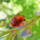 Lady Bug by Mirafaye