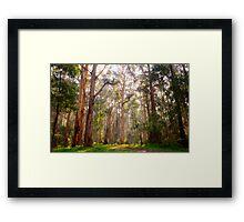 Light shining through the trees at Olinda Falls Framed Print