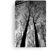 Blackened trees stand tall in the Yarra Ranges National Park Canvas Print