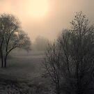 Soft Sun (Winter) by Daidalos