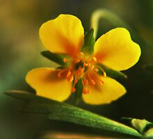 I am Yellow (from willd flowers collection) by Antanas