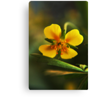 I am Yellow (from willd flowers collection) Canvas Print