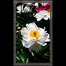 Flowers 13 by Ronald Eller