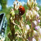 Lady Bug 2 by Mirafaye