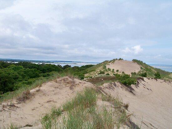 Montauk Walking Dunes by Dandelion Dilluvio