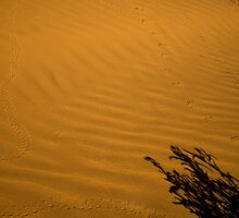 Desert Tracks #3 by Dick Paige
