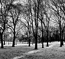 dormant time. central park, nyc by tim buckley   bodhiimages
