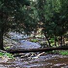 Stream Framed By Trees  by Evita