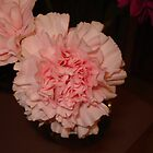Pink Carnations by dixiemorgan