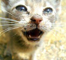 Meow by Hazel Dean