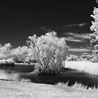 Riddells Creek in IR by David  Hibberd