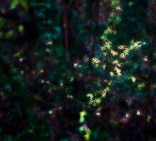 Undergrowth 1 by Rainer Kuehnl