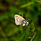 My 2nd Butterfly by Luís Lajas