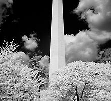 The Washington Monument in Infrared during the Cherry Blossom Festival by Carol M.  Highsmith