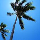 Dominican Palms by BlackEel