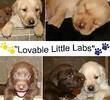 """Lovable Little Labradors"" by tawaslake"