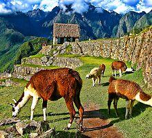 The Llamas of Machu Picchu by vadim19