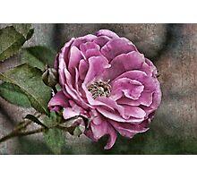 Precious Petals Photographic Print