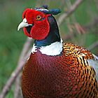 Pheasant by eprather95