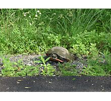 Turtle crossing the road Photographic Print