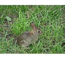 Bunny Rabbit Photographic Print