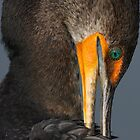 Shy Cormorant by William C. Gladish