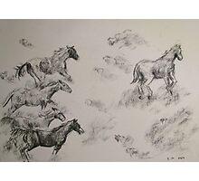 Horses running Free Photographic Print