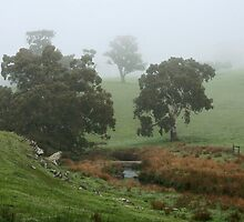 Misty Creek by LeeoPhotography