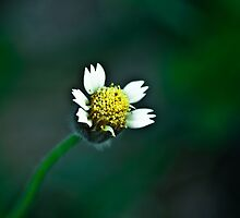 He is happiest who hath power to gather wisdom from a flower by Saikat Babin Biswas