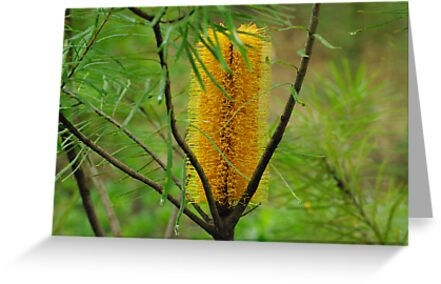 banksia by feeee