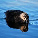 Duck by ktscarlett